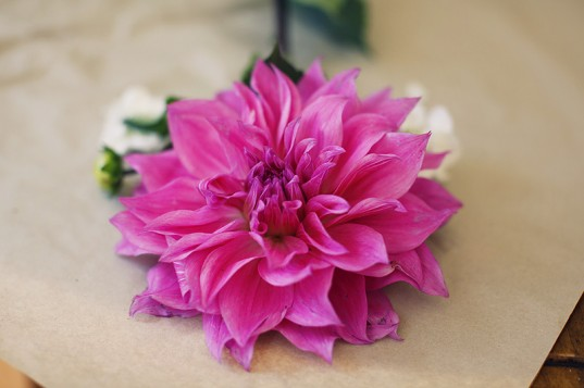 A mother's day dahlia